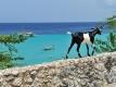 Lastminute Curacao