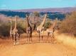 Goedkoop Kenia
