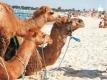 Aanbiedingen Sousse